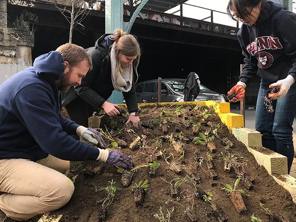 SHIFT Tusculum Square planting community
